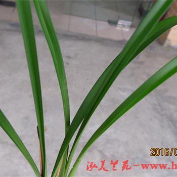 壁纸 花 盆景 盆栽 植物
