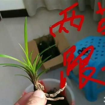 微型 兰花房设计图片